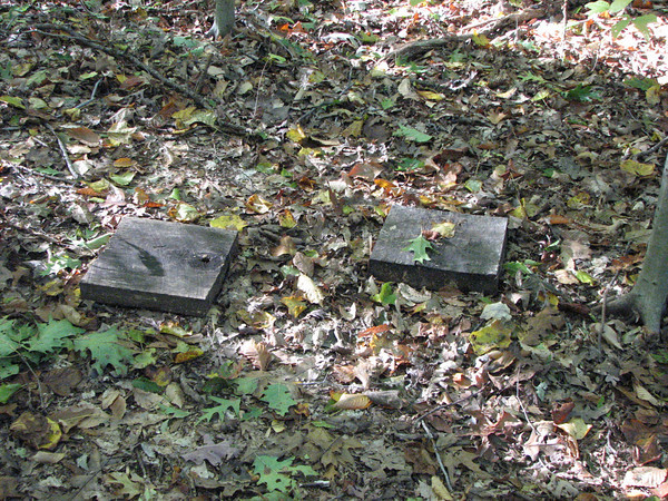 Fifty cover boards are laid out in pairs along the forest floor.