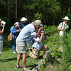 Nationwide Summer Butterfly Count - HRC members participate in three different counts (Eastern Shore, Chippokes/Hog Island, and Great Dismal Swamp)