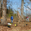 ECO-DISCOVERY PARK IN WILLIAMSBURG 2013  DEVELOPING A WILDLIFE GARDEN OF NATIVE PLANTS