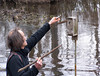 HRCVMN PROTHONOTARY WARBLER NEST BOX MONITORING ON DRAGON RUN RIVER
