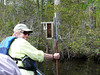 HRCVMN PROTHONOTARY WARBLER NEST BOX MONITORING ON NORTHWEST RIVER