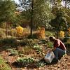 Stewardship: Ellipse Garden at Freedom Park in James City Co.