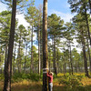 Ron Stephens measuring the height of the woodpecker nesting cavity.