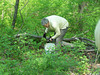 Removing garlic mustard at Demonstration Forest, April 2011