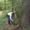Liz lopping Autumn Olive at Pocahontas SP