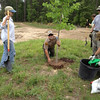 Chief Ranger Keith planting NATIVE Red Maple on Invasive Species Removal Day