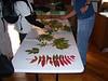 Tree ID Session at Banshee