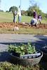 Pollinator garden planting on the John Warner Parkway in Charlottesville on October 15, 2015.  Photo by Leslie Middleton, RMN volunteer.