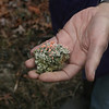 RMN Salamander Hike, March 3, 2012: Complex moss and Ruth Douglas' hand. Photo by Eric Johnson.