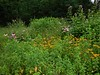 Bryan Park pollinator garden in summer.  Photo by Caroline Meehan.