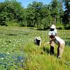 Riverine Chapter field trip to John Hummer's wetlands, June 2009