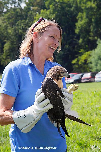 VMN Dr. Belinda Burwell prepares to release a Redtail Hawk that was rehabed at the Blue Ridge Wildlife Center.