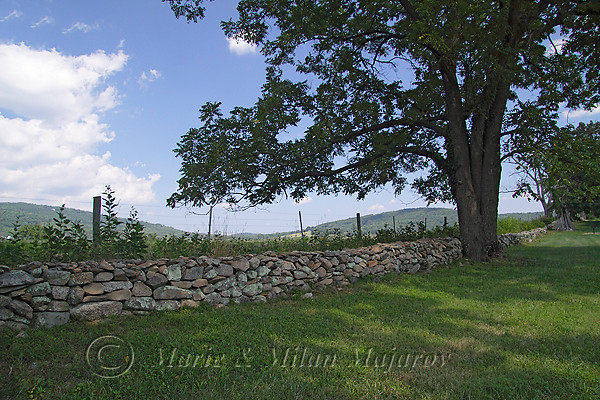 Sky Meadows State Park -- a magnificient location for a summer VMN picnic!