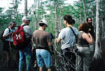 Hike in Big Cypress