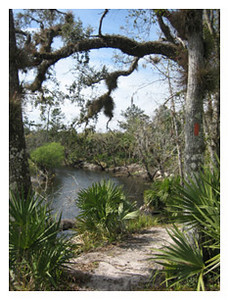 Little Big Econ State Forest<br /> photo credit: Sandra Friend / Florida Trail Association