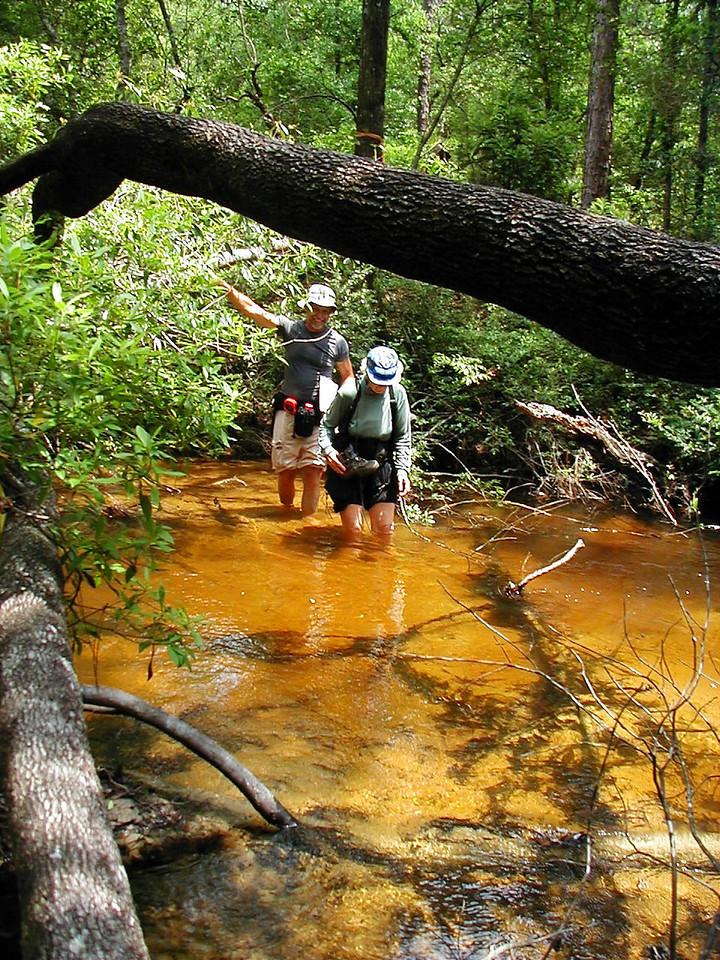 Eglin stream crossing