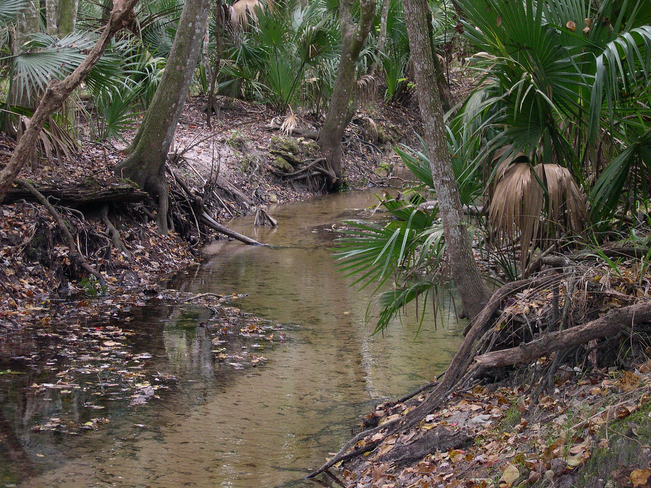 Bulow State Park Florida Trail Hike 045