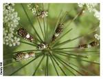 Caterpillars<br /> photo credit: Candace Hill / Florida Trail Association
