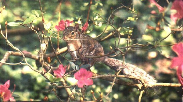 Squirrel at Ravine Gardens<br /> photo credit: Candace Hill / Florida Trail Association