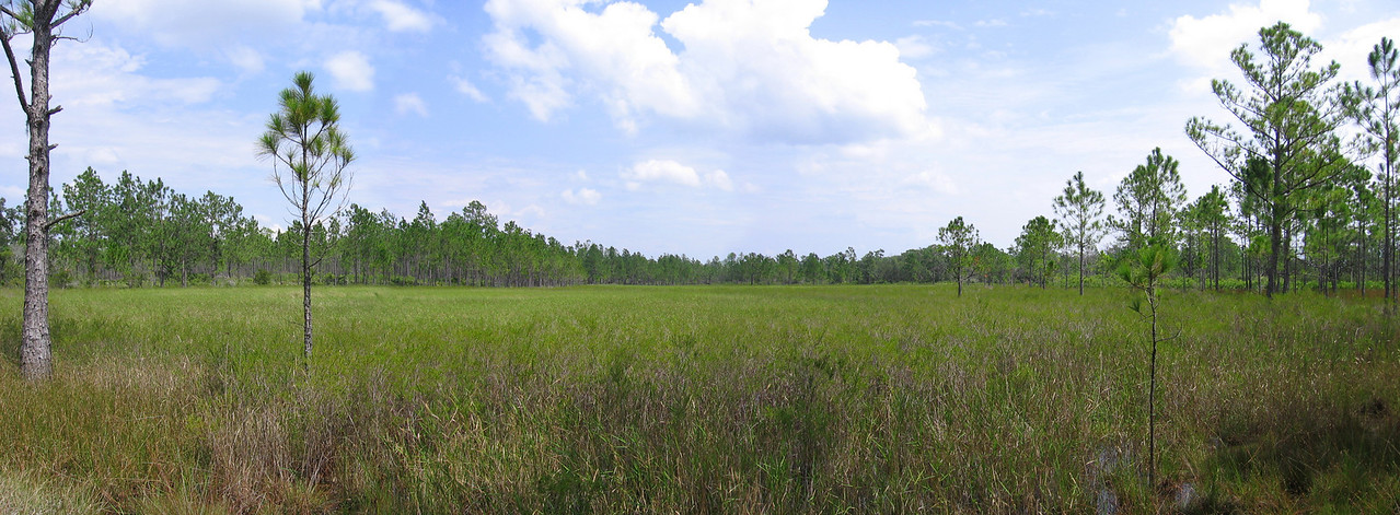 Arbuckle Tract, Lake Wales Ridge State Forest<br /> photo credit: Brian OHalloran / Florida Trail Association
