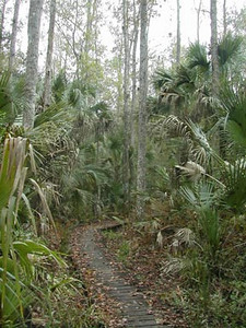 St Francis Trail<br /> photo credit: Sandra Friend / Florida Trail Association