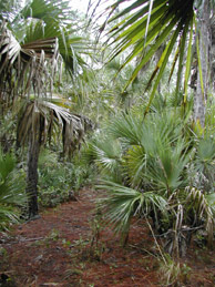 Grassy Waters Preserve<br /> photo credit: Sandra Friend / Florida Trail Association