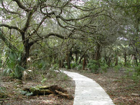 Frenchman's Forest Natural Area<br /> photo credit: Sandra Friend / Florida Trail Association