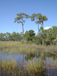 Corbett WMA<br /> photo credit: Sandra Friend / Florida Trail Association
