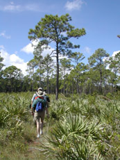 Jonathan Dickinson State Park<br /> photo credit: Sandra Friend / Florida Trail Association