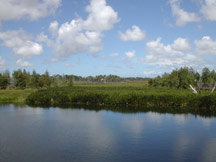 Green Cay Wetlands<br /> photo credit: Sandra Friend / Florida Trail Association