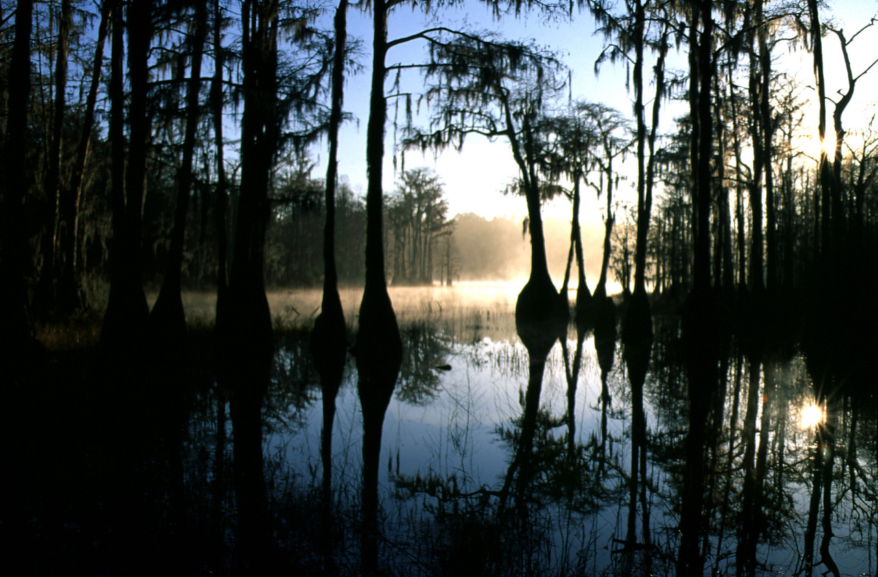 Sand Pond, Pine Log State Forest<br /> photo credit: Bart Smith / Florida Trail Association