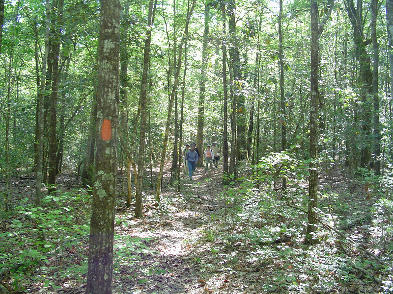 Blaze & Hikers along Econfina Trail<br /> Sue Wiles / Florida Trail Association