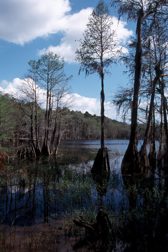 Sand Pond, Pine Log State Forest<br /> photo credit: Sandra Friend / Florida Trail Association