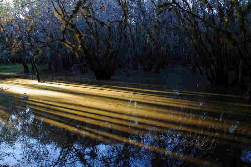 Myakka River State Park<br /> Kurt Gildemeister / Florida Trail Association