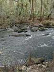 Hillsborough Rapids<br /> Deb Blick / Florida Trail Association