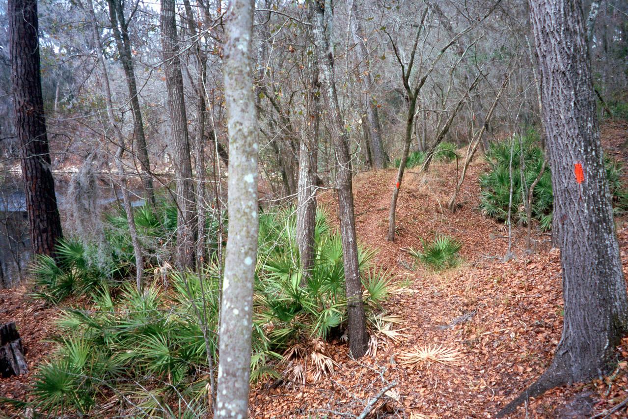 En route to Holton Creek<br /> Sandra Friend / Florida Trail Association