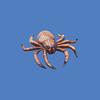 Spider, 3'L  #7106