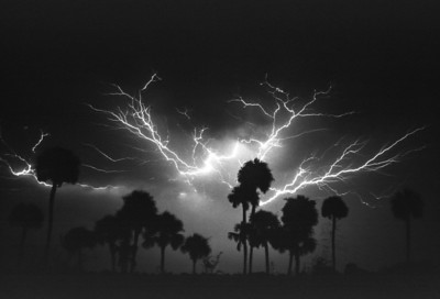 Lightning in the Cabbage Palms