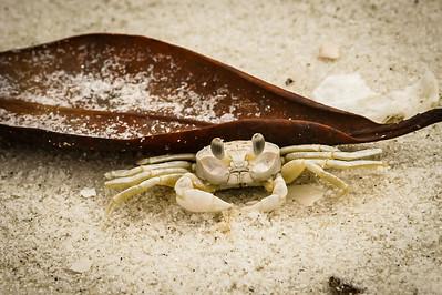 Mr. Sand Crab