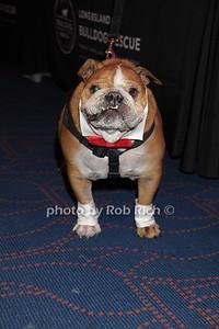 Ziggy photo by Rob Rich/SocietyAllure.com © 2014 robwayne1@aol.com 516-676-3939
