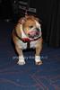 Ziggy<br /> photo by Rob Rich/SocietyAllure.com © 2014 robwayne1@aol.com 516-676-3939
