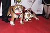 Ziggy and Matty<br /> photo by Rob Rich/SocietyAllure.com © 2014 robwayne1@aol.com 516-676-3939