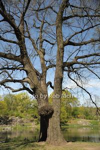 Central Park photo by Rob Rich/SocietyAllure.com © 2014 robwayne1@aol.com 516-676-3939