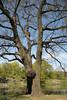 Central Park<br /> photo by Rob Rich/SocietyAllure.com © 2014 robwayne1@aol.com 516-676-3939