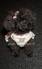 Pupi Dupi<br /> photo by Rob Rich/SocietyAllure.com © 2012 robwayne1@aol.com 516-676-3939