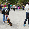 Debbie Blank | The Herald-Tribune<br /> Canine competitors (from left) Pete, Rhea and Daisy get ready for the fastest down contest.
