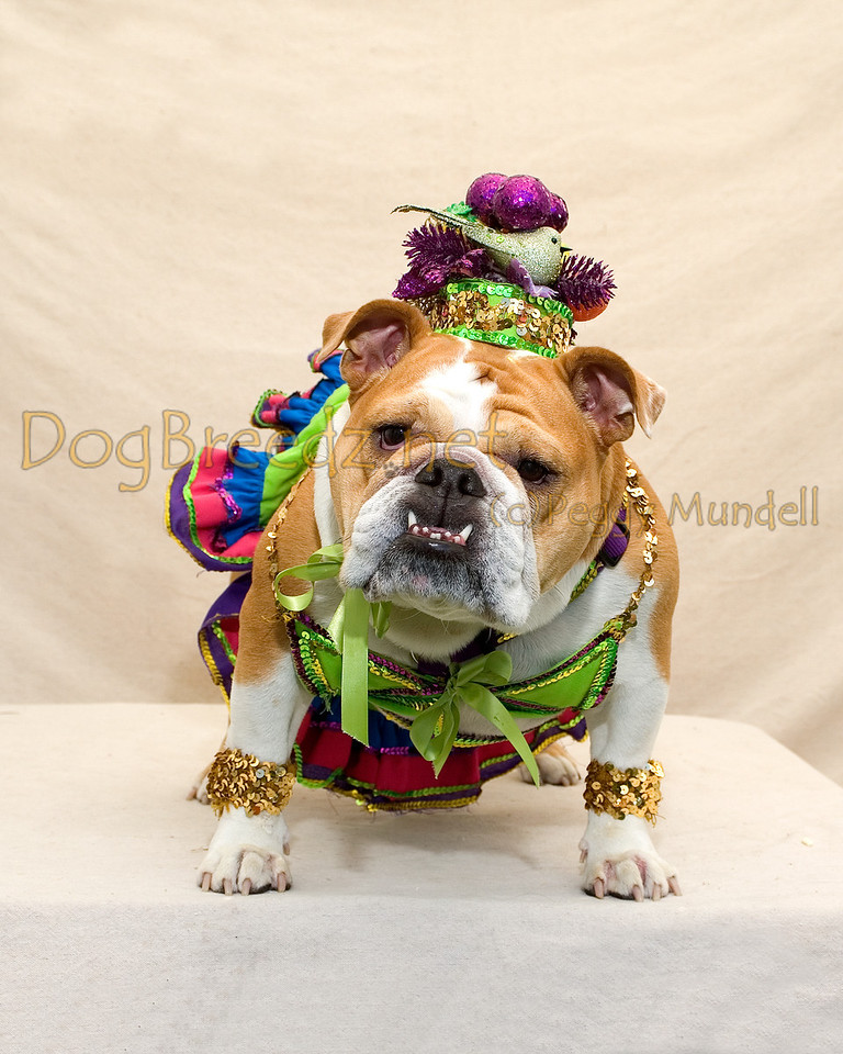"Roxy the Bulldog won BEST IN SHOW in her Carmen Miranda costume at the 4th Annual Blessing of the Animals on October 8, 2011 in Balboa Park, San Diego, CA.  This event was hosted by <a href=""http://www.blessouranimals.org"" target=""_blank""> Kindred Spirit Animal Ministry</a>."