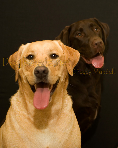 Camp Bow Wow Livermore - Charlie and Lucy DeSimone
