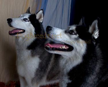 Camp Bow Wow Livermore - Dante and Skyler Trotte