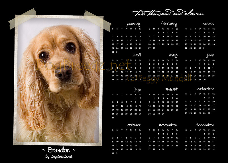 """2011 Calendar - best in 5x7 size.  Try it as a unique folded greeting card too, envelope incliuded ... for a one-of-a-kind New Years, Birthday, Anniversary card or party invitation!  To order as a card, click """"BUY"""" then choose options - CARD - 5x7 - ANYTHING - and apply your photo to the blank template option. You'll be able to personalize the inside (and back of card) any way you would like."""